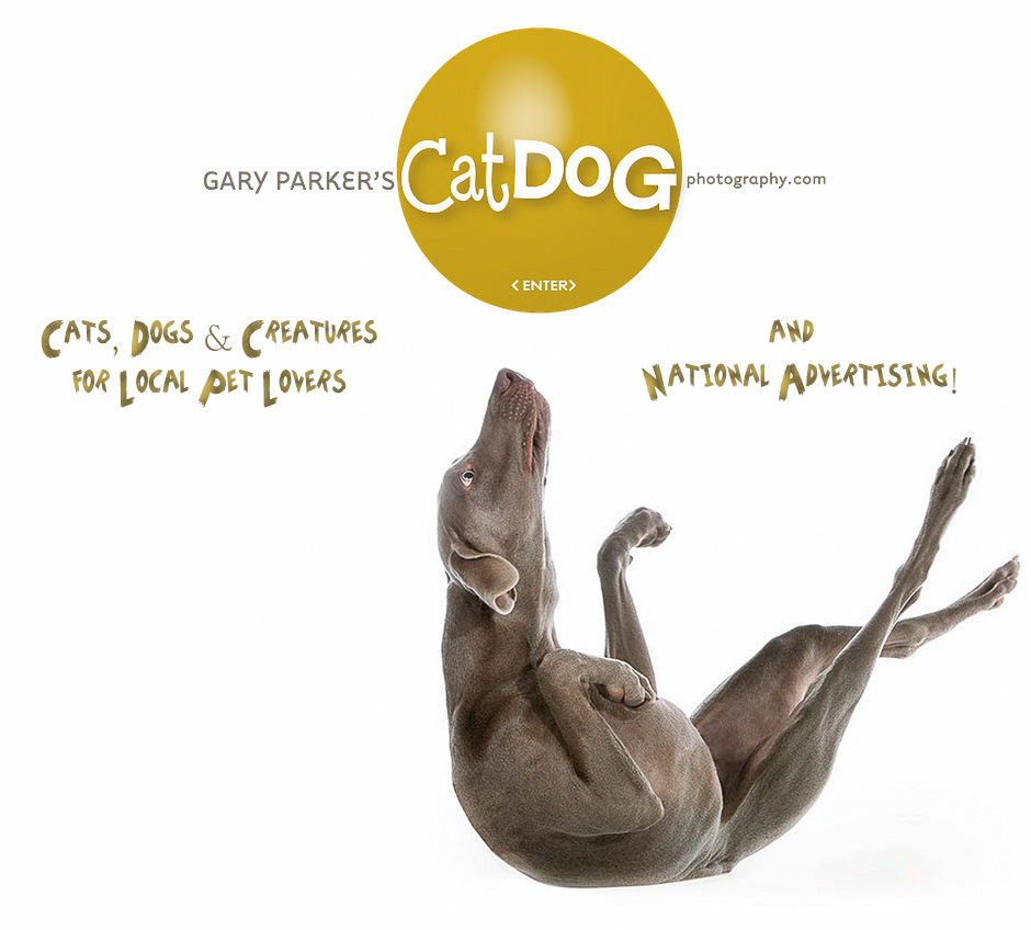 Gary Parker's Cat Dog Photography