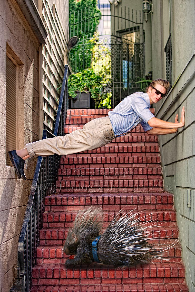 MODEL STUCK OVER AFRICAN CRESTED PORCUPINE, SAN FRANCISCO