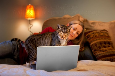 American shorthair mixed breed cat... Ad and branding for Veterinary Pet Insurance.