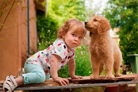 PHOTOGRAPHING THIS 13 MONTH OLD CHILD AND 2 MONTH OLD GOLDEN RETRIEVER PUPPY WAS AN EXERCISE IN PATIENCE...