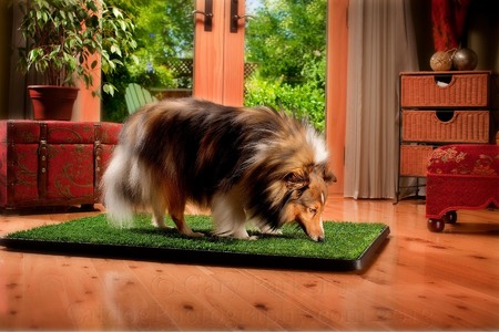 SHELTIE OF PUP GEAR DOGGIE INDOOR PEE PAD