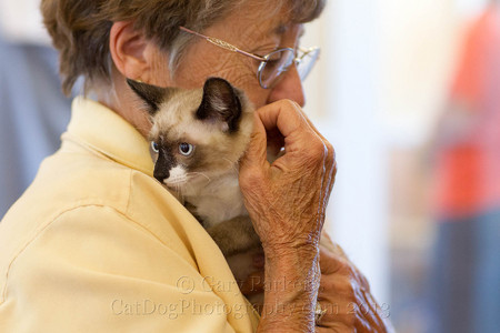 SIAMESE MIX WITH VOLUNTEER AT  HUMANE SOCIETY SILICON VALLEY