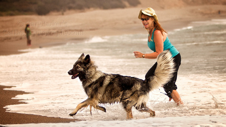 FUN IN THE SURF WITH PRUDENCE, THE PHOTOGRAPHER'S AMERICAN ALSATIAN...