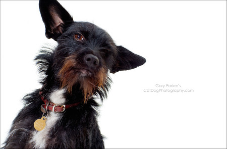 A COOL LOOKING DOG SHOT FOR A LOCAL CLIENT...