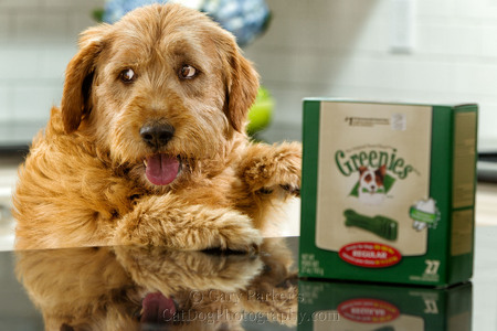 2013 GREENIES DOG & CAT TREATS THIEF CAUGHT IN THE ACT.... VIEW VIDEO