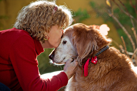 KAREN KISSES CHEWY, HER AGING GOLDEN RETRIEVER...